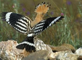 Птицы с клювом своими руками