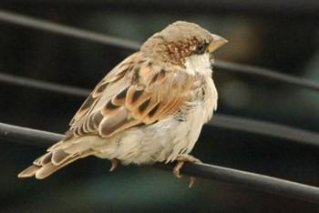 птицы рядом с нами