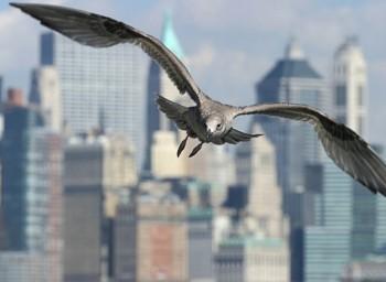 Почему нельзя уничтожать птиц?