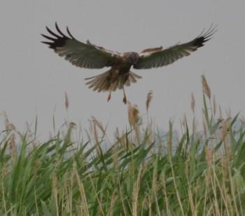 Особенности строения хищных птиц