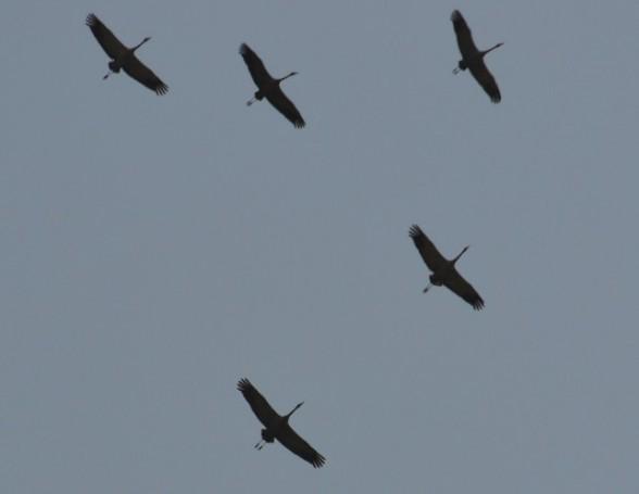 Что указывает путь перелетным птицам?