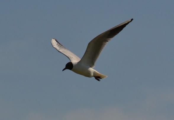 Распространённость птиц по планете
