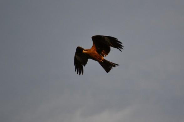 Чем природа наделила птиц