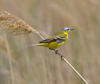птицы синоптики