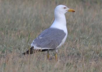 Особенности поведения птиц