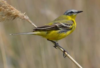 Происхождение и главные отряды птиц