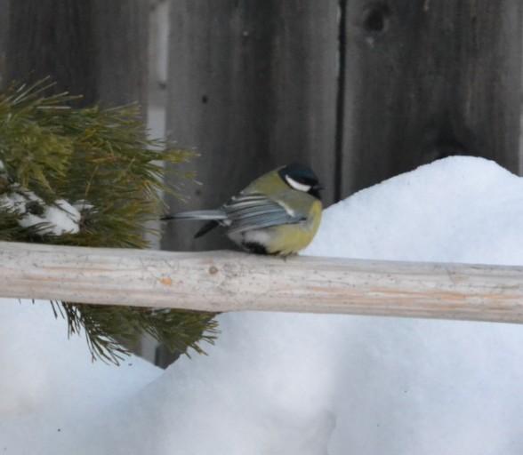 Кормим птиц в зимнее время