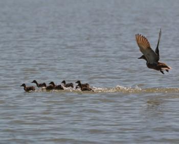 Птицы речной поймы