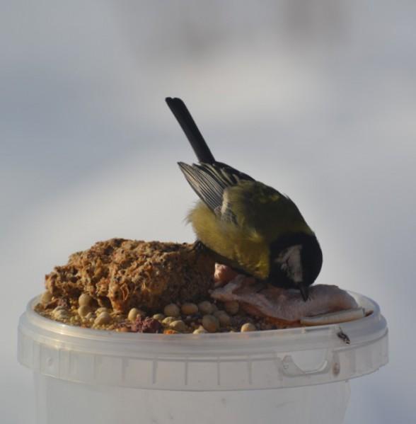 Идеи строительства кормушек для птиц